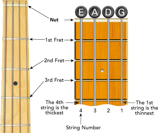 Bass Guitar Fretboard Diagram